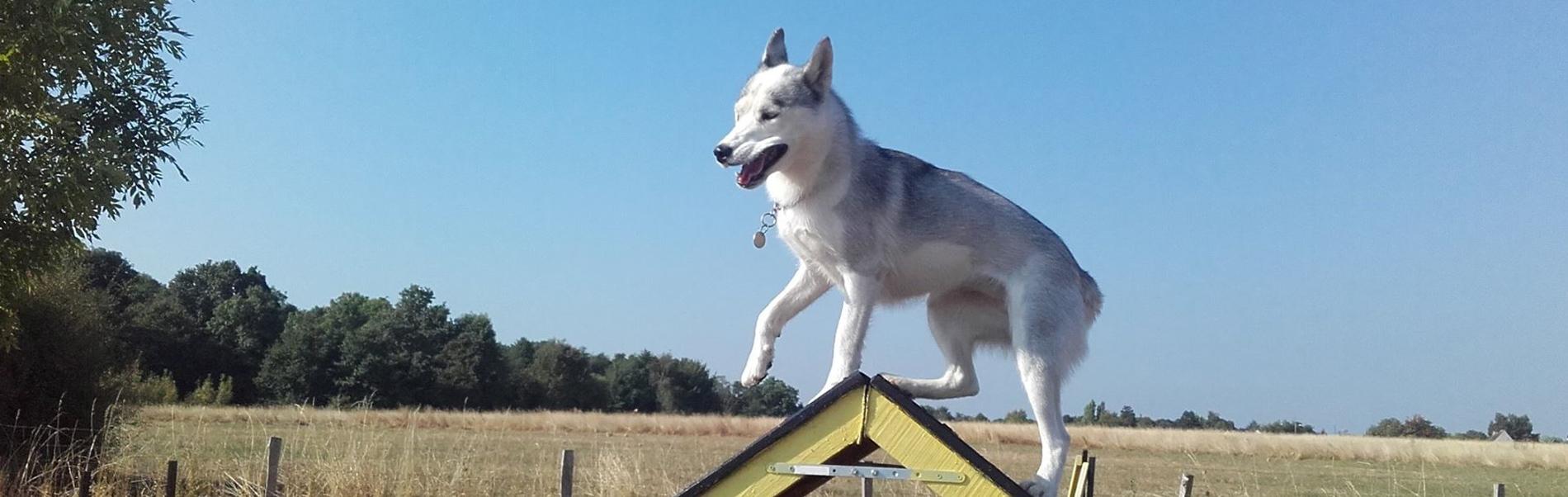 dressage chien 41